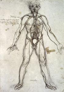 Leonardo / Gefäßsystem nach Galen / fol. 36 r von AKG  Images