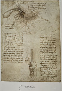 Leonardo / Milz–, Leber–, Magengefässe/f. 61r by AKG  Images