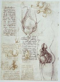 Leonardo / Genitalien männl. weibl. / fol 54v von AKG  Images