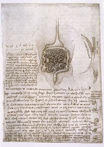 Leonardo / Verdauungsapparat / fol. 73 r von AKG  Images