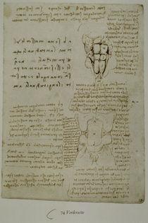Leonardo / Bauchwand-Muskulatur / fol. 74 r von AKG  Images