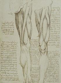 Leonardo / Bein-Muskulatur / fol. 77 v von AKG  Images