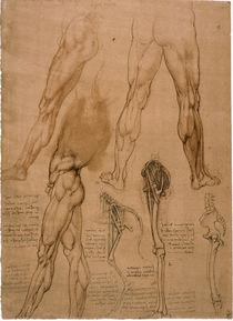 Leonardo / Beinmuskulatur / Pferdebein/f. 95r von AKG  Images
