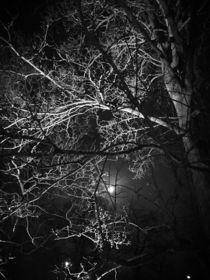 Vollmondnacht im Winter by Martina Lender-Frase