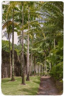 Palms in Tropical Garden von cinema4design