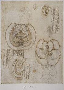 Leonardo / Hirnkammern / fol. 104r by AKG  Images