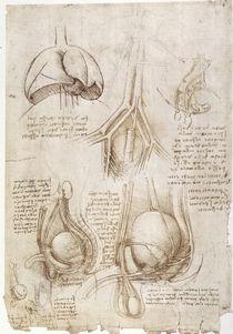 Leonardo / Lunge Blase Genitalien / fol. 106v von AKG  Images