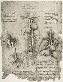 Leonardo / Bauch Brustkorb / fol. 107 r by AKG  Images