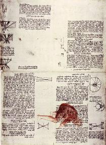 Leonardo / Physiologie des Sehens/f. 118 r von AKG  Images