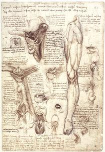 Leonardo / Zunge Rachen u. a. / fol. 134 r von AKG  Images