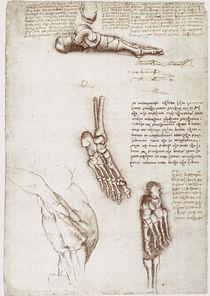 Leonardo / Schulter Fußknochen / fol. 135 r by AKG  Images