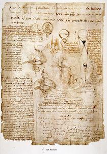 Leonardo / Bauchorgane / Embryo / fol. 198 v von AKG  Images