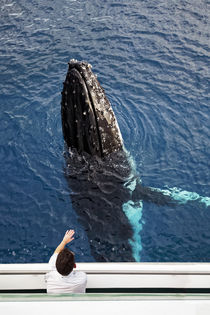 Whale watching by Norbert Probst