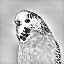 Wellensittich in schwarz und weiß 2 by kattobello