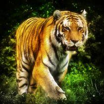 Tiger im Dschungel 2 by kattobello
