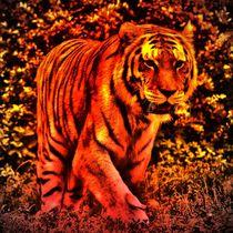Red Tiger 2 von kattobello