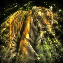 Tiger im Zwielicht by kattobello