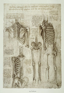 Leonardo / Menschl. Skelett / fol. 142 r by AKG  Images