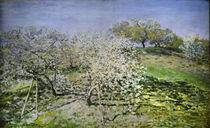 C.Monet, Frühling. Blühende Apfelbäume von AKG  Images