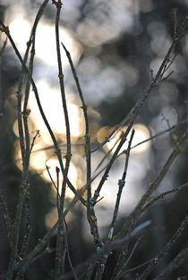 Winterlicht... by loewenherz-artwork