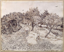 The Olive Trees von Vincent Van Gogh
