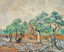 The Olive Orchard, 1889 von Vincent Van Gogh