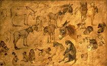 Study of Donkeys, Kittens and Monkeys by Jan Brueghel the Elder