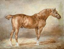 A docked chestnut horse von Theodore Gericault