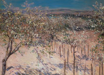 Orchard with Flowering Apple Trees