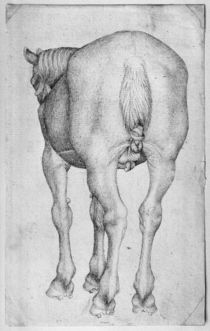 Horse, from the The Vallardi Album von Antonio Pisanello