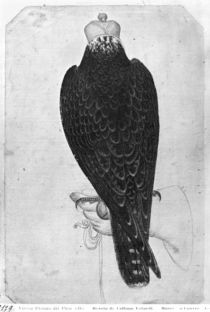Hawk on hand, seen from behind von Antonio Pisanello