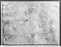 Sheet of studies, from the The Vallardi Album von Antonio Pisanello