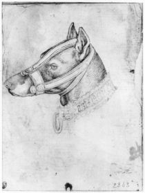Head of a muzzled dog, from the The Vallardi Album von Antonio Pisanello