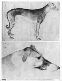 Greyhound and head of a greyhound von Antonio Pisanello