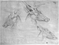 Two heads of stags, one head of a doe von Antonio Pisanello