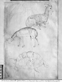 Two tortoises, goat and sheep von Antonio Pisanello