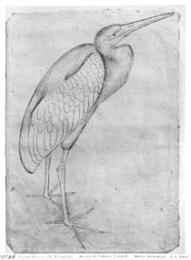 Pelican, from the The Vallardi Album von Antonio Pisanello