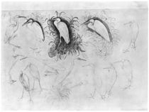 Fourteen egrets, from the The Vallardi Album von Antonio Pisanello
