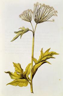 Angelica, from 'La Guirlande de Julie' von Nicolas Robert
