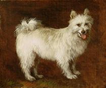 Spitz Dog, c.1760-70