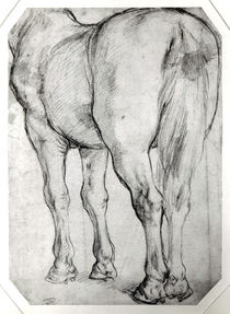 Horse's Rear by Peter Paul Rubens