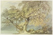 A Great Tree, c.1796 by Joseph Mallord William Turner