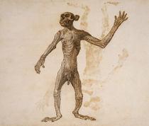 Monkey Standing, Anterior View von George Stubbs