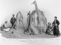 The Giraffes with the Arabs who brought them over to this country by George the Elder Scharf