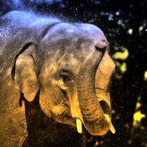 Magischer Elefant 2 von kattobello