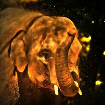 Elefant im Sonnenuntergang by kattobello