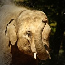 Elefant beim Sandbad 1 by kattobello