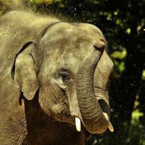 Elefant beim Sandbad 2 by kattobello