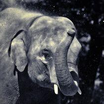 Elefant in schwarz und weiß 2 by kattobello