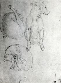 Study of a dog and a cat, c.1480 by Leonardo Da Vinci